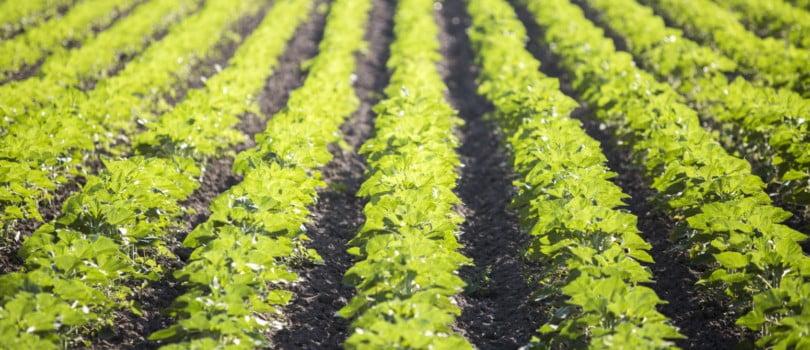 """Falta investimento para que Portugal ganhe """"preponderância"""" no setor agrícola, diz diretor-geral da Vitacress"""