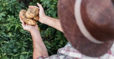 Política fiscal dos EUA vai beneficiar agricultores que vendam em cooperativas