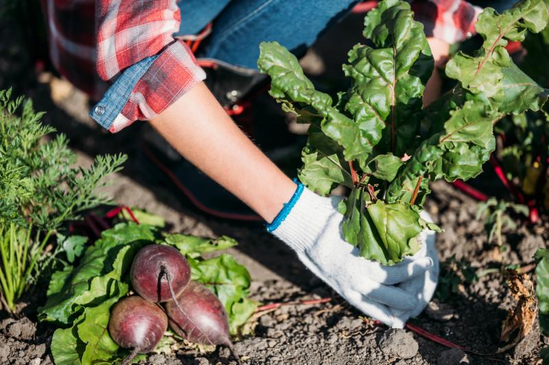 Estatuto da Agricultura Familiar português será exemplo para outros países da CPLP