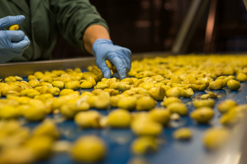 Sortegel reforça negócio da castanha e diversifica produção