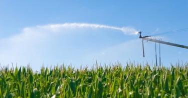 China quer desregular cultivo de transgénicos