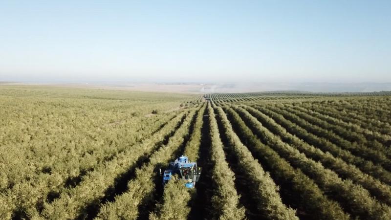 Herdade Maria da Guarda investe 5 M€ na plantação de 120 mil oliveiras