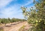 TAGUS tem 200 mil euros para apoiar transformação de produtos agrícolas no Ribatejo Interior