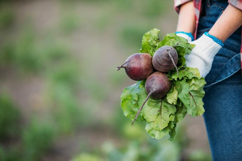 Novo Estatuto para a Pequena Agricultura Familiar em vigor até março