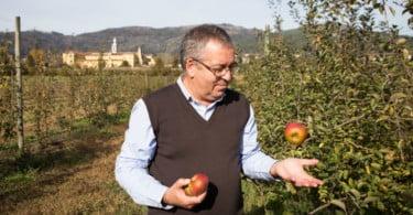 Recuperar as variedades tradicionais de fruta portuguesa