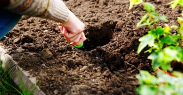 Estatuto da Agricultura Familiar está quase pronto
