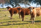 Brasil suspende exportação de animais vivos