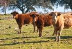 Rússia suspende restrições à carne de vaca da UE