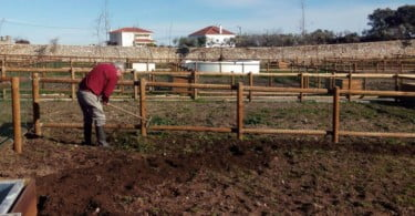 Hortas sociais de Castelo Branco já cultivam