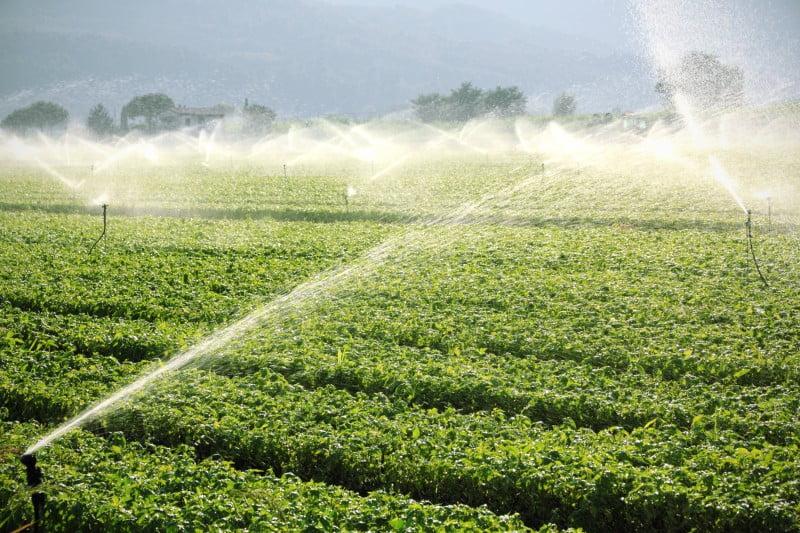 Fenareg diz que seca causará prejuízo de 1,1 mil M€ na economia nacional