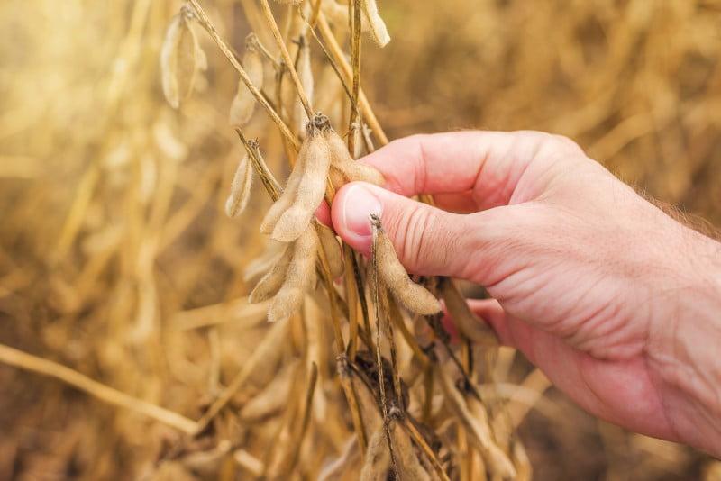 Comissão Europeia anuncia plano para aumentar produção de proteínas vegetais