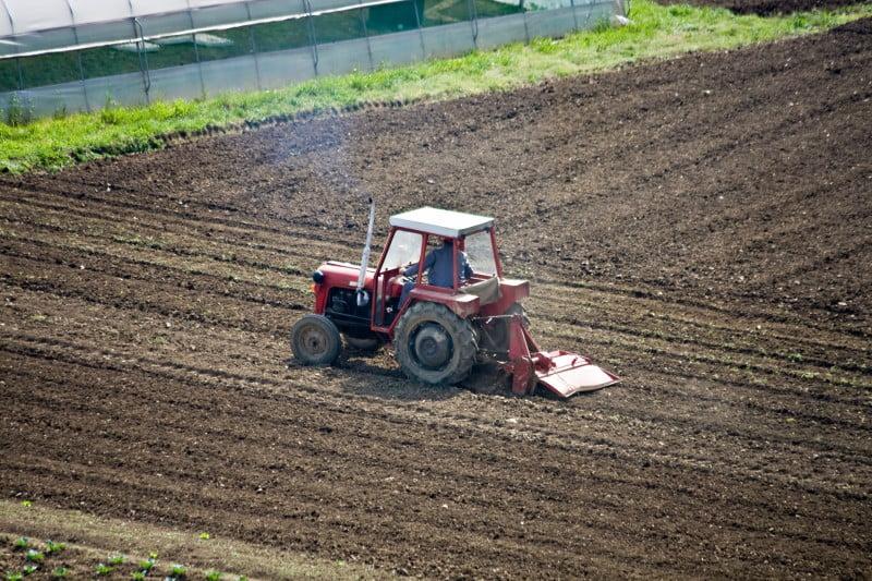 FAO aprova sistema agro-silvo-pastoril português