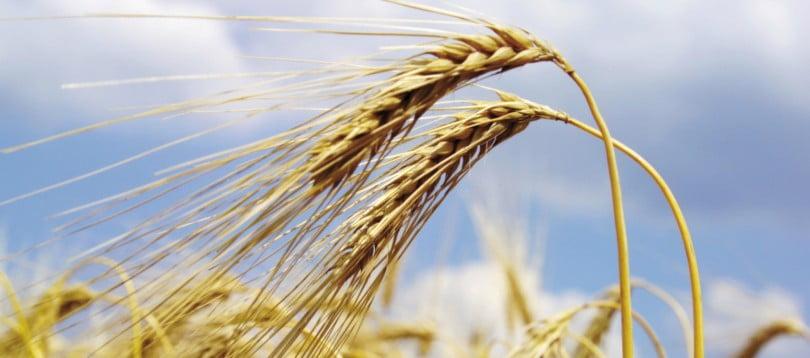 Governo aprova estratégia para a promoção da produção de cereais