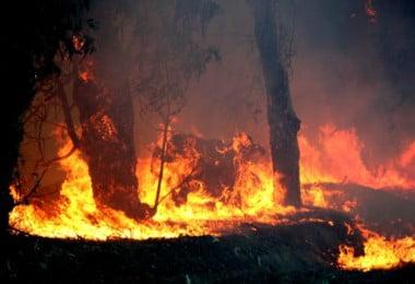 Governo divulga lista dos agricultores afetados pelos incêndios