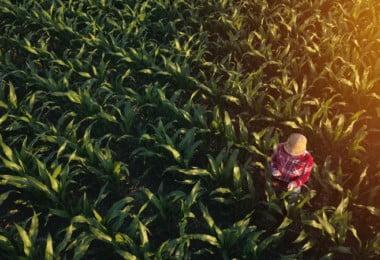 Assim será o futuro da agricultura…