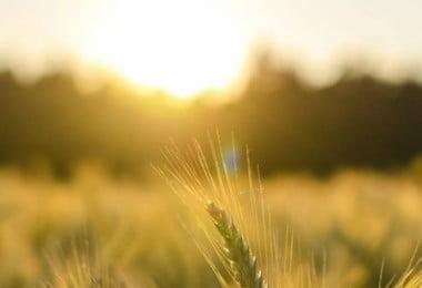 Startups com tecnologia aplicada ao sector agrícola recebem apoios à internacionalização