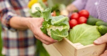 Agricultura biológica já ocupa 6,9% da Superfície Agrícola portuguesa