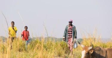68 mil famílias rurais angolanas vão receber 38 M€