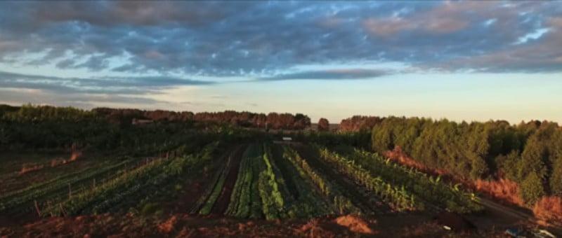 Especialista em Agricultura Sintrópica em Portugal para dar cursos de iniciação