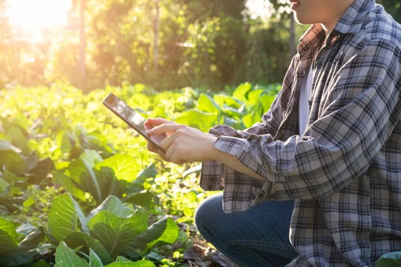 Madeira cria unidade de aceleração de negócios agrícolas