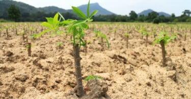 'Escola na Machamba' já preparou mais de 60 mil agricultores moçambicanos para as alterações climáticas