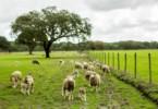 Sistema agro-silvo-pastoril português é património mundial