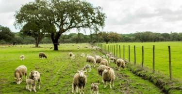 """Descarbonização: """"Quando se retira os animais dos territórios o que se produz é deserto"""""""
