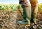 China: saiba como o país revolucionou a sua agricultura e se tornou mais 'verde'
