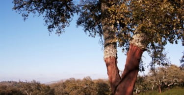 "Produtores agroflorestais reclamam apoios públicos para ""montado mais resiliente"""