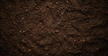 Portugal em projeto de investigação internacional para recuperação de solos contaminados