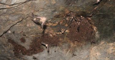 Abrigo de morcegos de Alqueva é um dos mais importantes da Europa