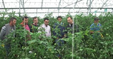 Semillas Fitó realiza dia de campo dedicado ao tomate