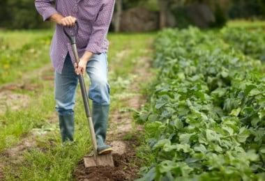 IFAP paga 97,2 M€ aos agricultores