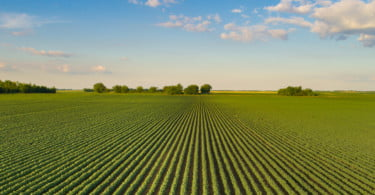 """Consultoras agrícolas defendem-se de acusações de """"falta de transparência"""" do IFAP"""