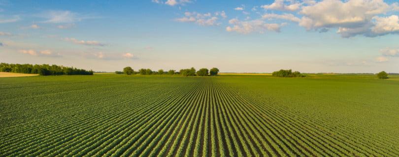 Ministério da Agricultura antecipa pagamentos aos agricultores