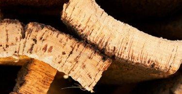 Lucros da Corticeira Amorim atingem os 18,8 M€ no primeiro trimestre