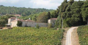 Grupo Amorim compra propriedade com 50 hectares no Dão