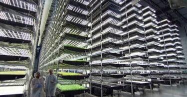 Poderá a IoT tornar a produção agrícola mais eficiente?