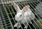 ASPOC lança campanha para promover consumo de carne de coelho