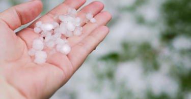 """CNA pede """"mais apoios"""" para os agricultores afetados pela inundações e granizo"""