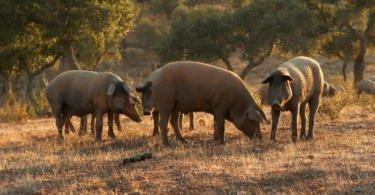 """Fenapecuária: """"agricultura está a perder influência para o fundamentalismo da política ambiental"""""""