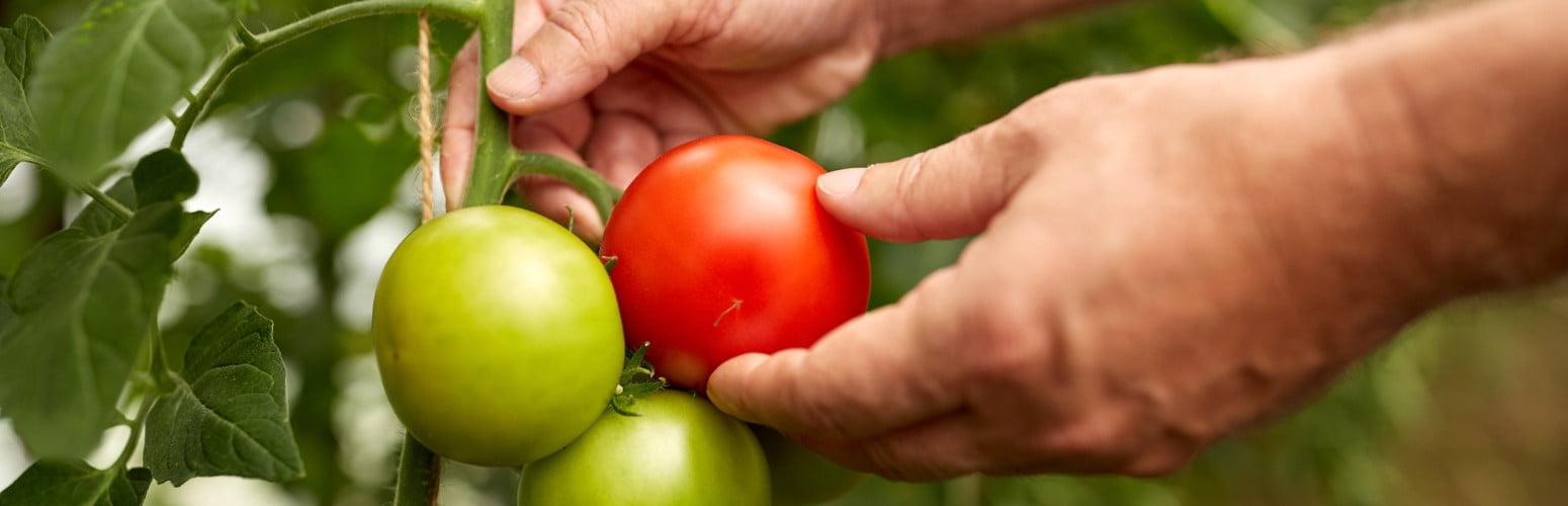 O Governo aprovou esta semana uma iniciativa legislativa do Bloco de Esquerda (BE) que recomenda a promoção de produtos biológicos e locais nas cantinas públicas.