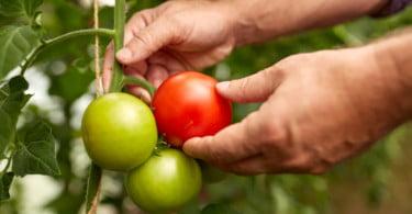 Regras da agricultura biológica vão mudar