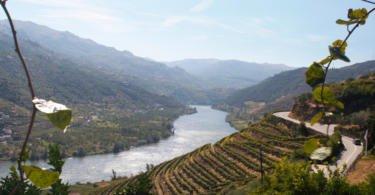 Produção de Vinho do Porto deverá cair