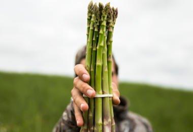 Espargos verdes com grande potencial de crescimento