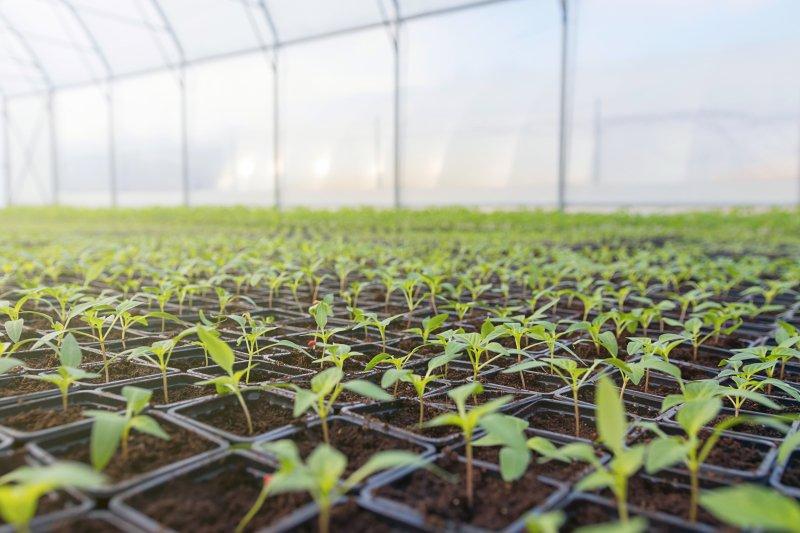 """Odemira cria Grupo de Trabalho para """"nova agricultura intensiva"""""""