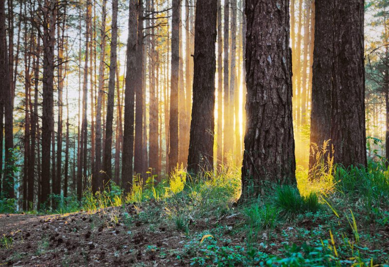 Criação da empresa pública de gestão florestal está quase concluída