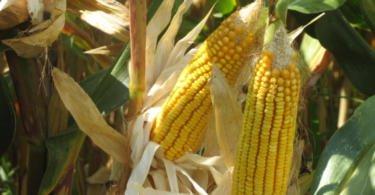 IST e PortugalFoods debatem biodiversidade no setor alimentar
