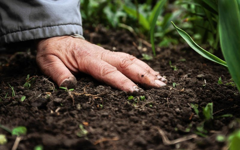 Já ouviu falar de Comunidades que Sustentam a Agricultura?