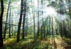 Governo lança novo apoio à reflorestação em áreas ardidas